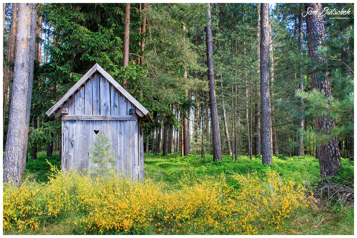 Kleines Hexenhaus im Wald