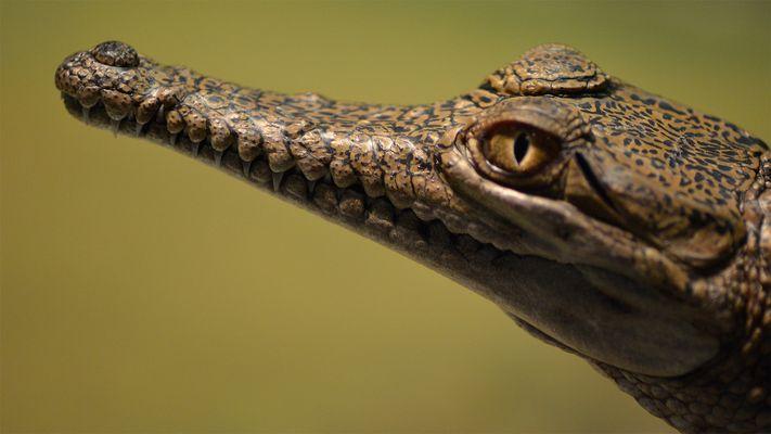 Kleines Kroko