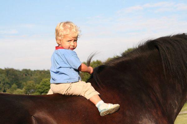 kleines Mädchen, großes Pferd