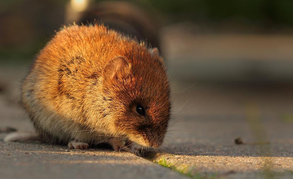 Kleines Mäuschen...