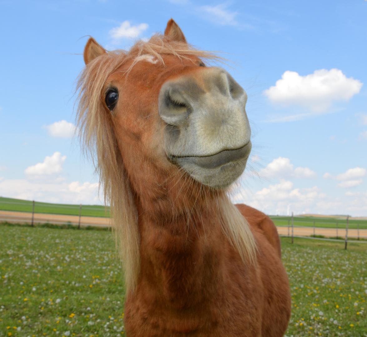 Kleines Pferd ganz groß !