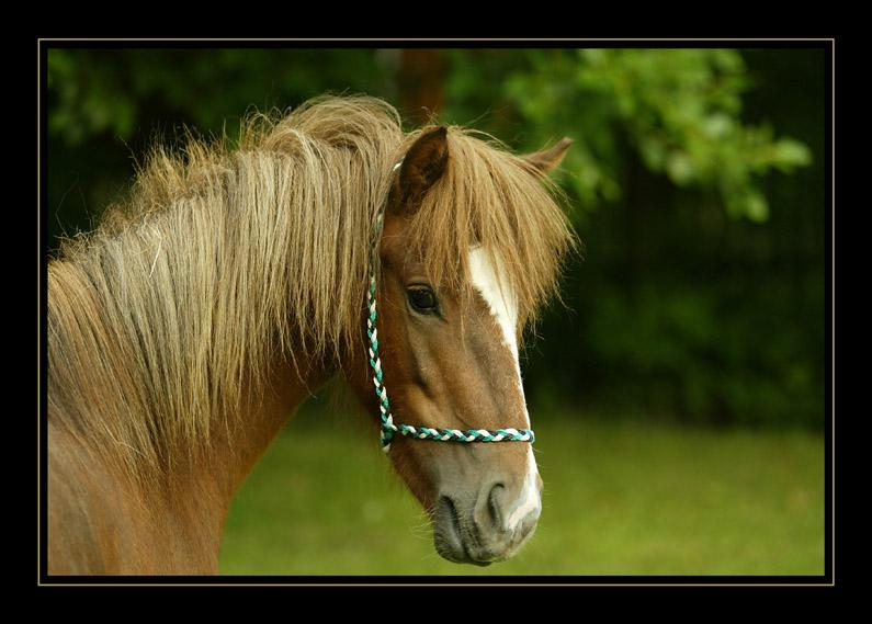 kleines Pony