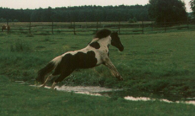 Kleines Pony....großer Sprung