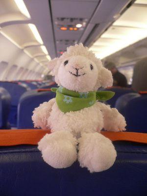 Kleines Schaf auf grosser Reise!