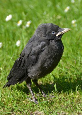 Kleines Vogelbaby