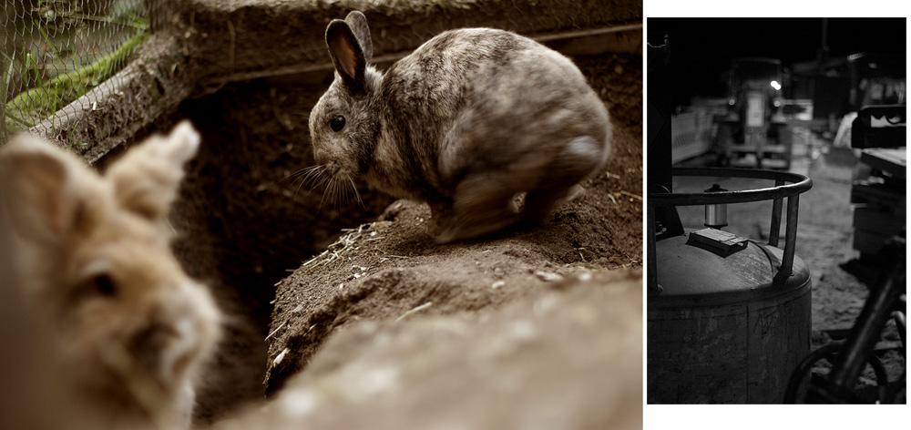Kleintierfotografie in der unnatürlichen Umgebung des arbeitenden Homo Ludens