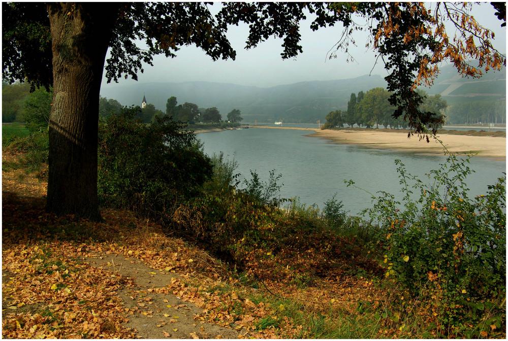 Kleinwasser am herbstlichen Rhein (3)