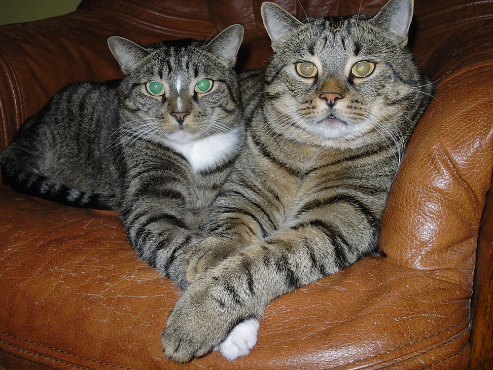 Kleo und Shiva