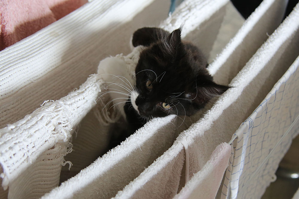 Klettern im Wäscheständer