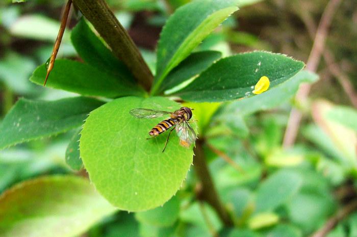 kl.Fliege