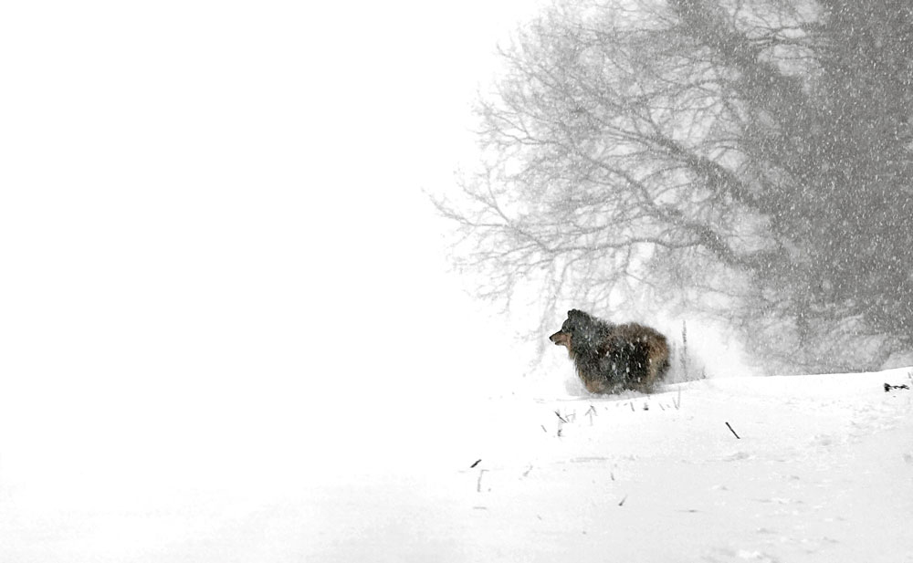 Klimakatastrophe mit Hund