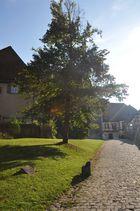 Kloster Bebenhausen Fortsetzung 2