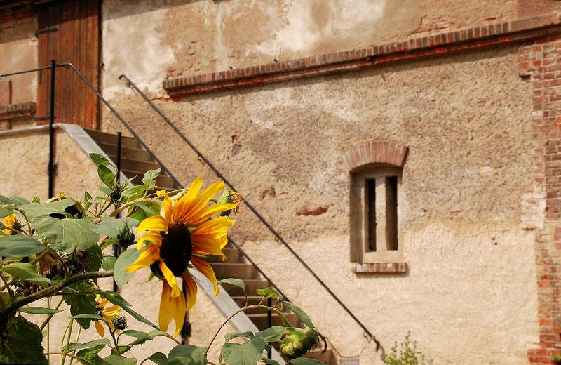 Kloster Buch VI