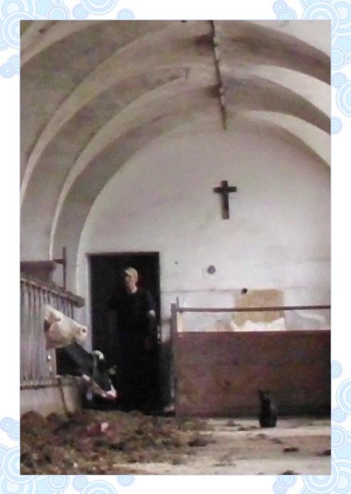Kloster - Kreuz - Kühe - Katze