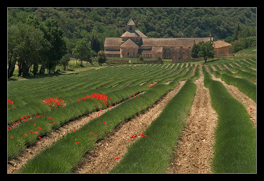 Kloster Senanque...