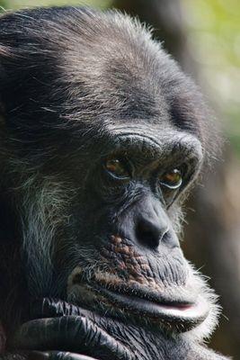 Klüger als Mensch denkt  | Zoo Karlsruhe