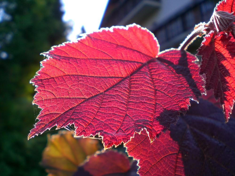 Knalliger Herbst