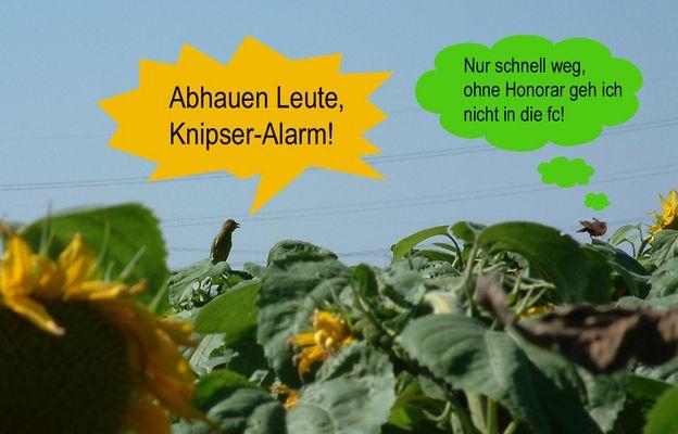 Knipser-Alarm :-)