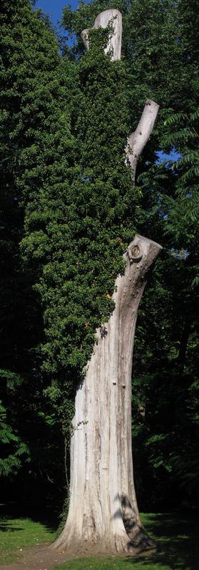 Knochenbaum