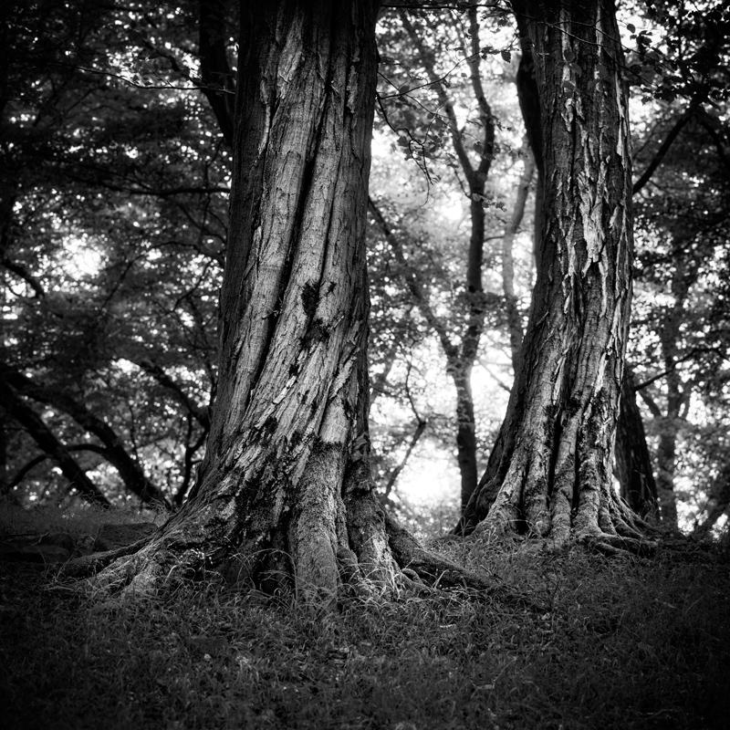 Knorreichensteig, Nationalpark Kellerwald