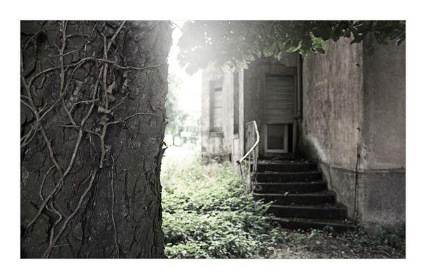 knorriger Baum vor maroder Villa