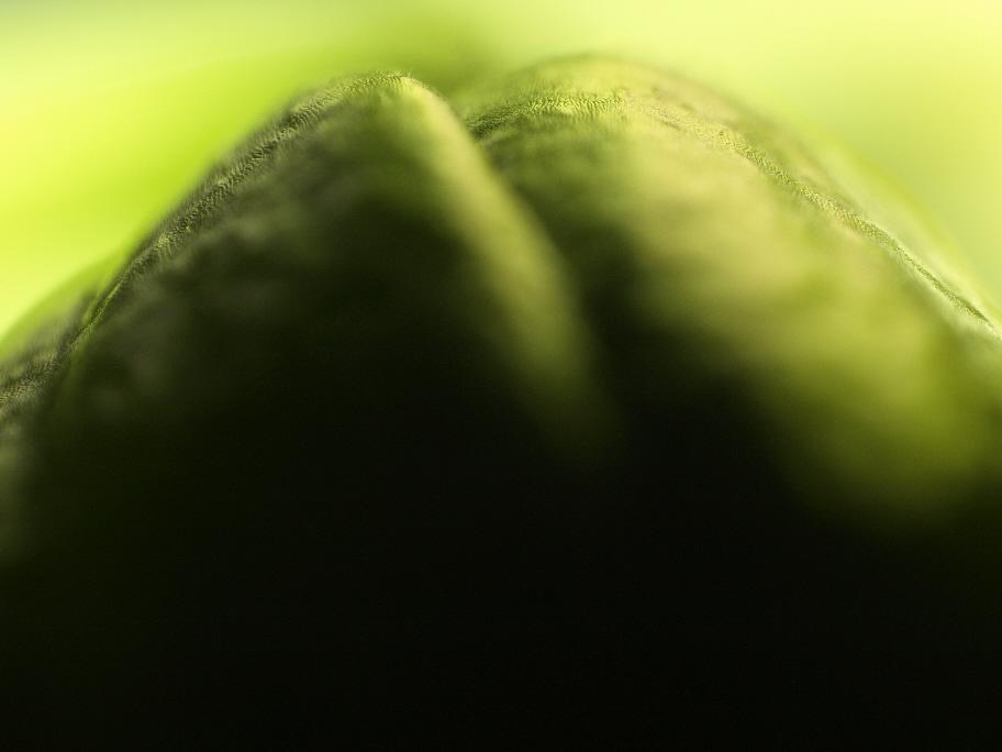 knospengrün