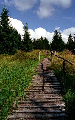 Knüppeldamm bei der Leistenklippe Harz