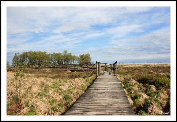 """Knuppelpad in Fagne Wallonne. Parc naturel """"Hautes-Fagnes-Eifel"""". Belgique. Belgium."""