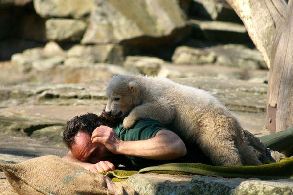 Knut das Eisbärenbaby