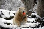 Knut ist glücklig