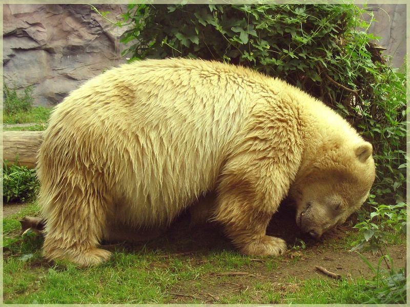 Knut kann mir mal den Buckel runterrutschen !!