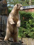 Knut, was für ein Bär!