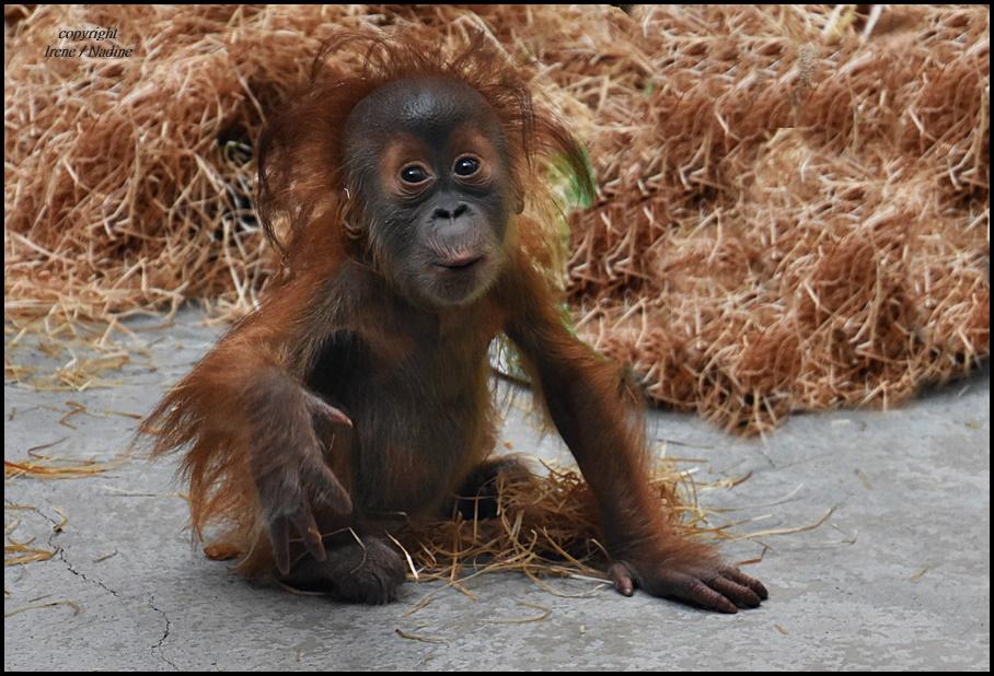 knutsch mich foto bild natur baby zoo bilder auf fotocommunity. Black Bedroom Furniture Sets. Home Design Ideas