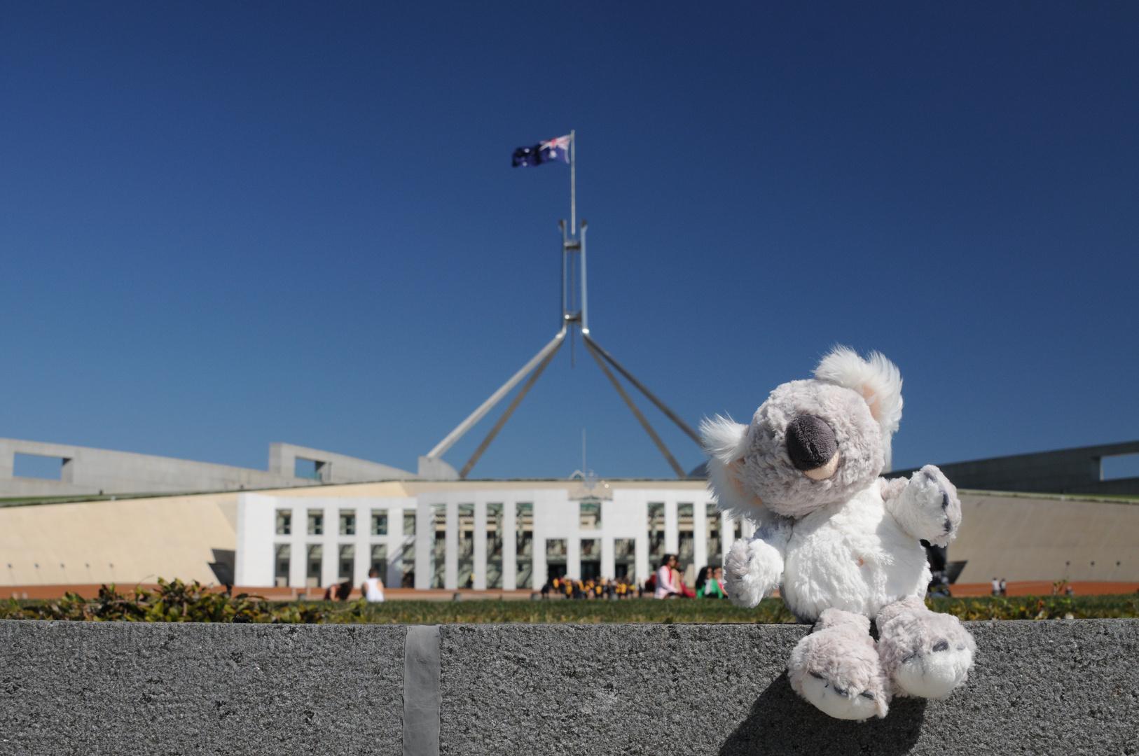 Koala vor dem Parliament House