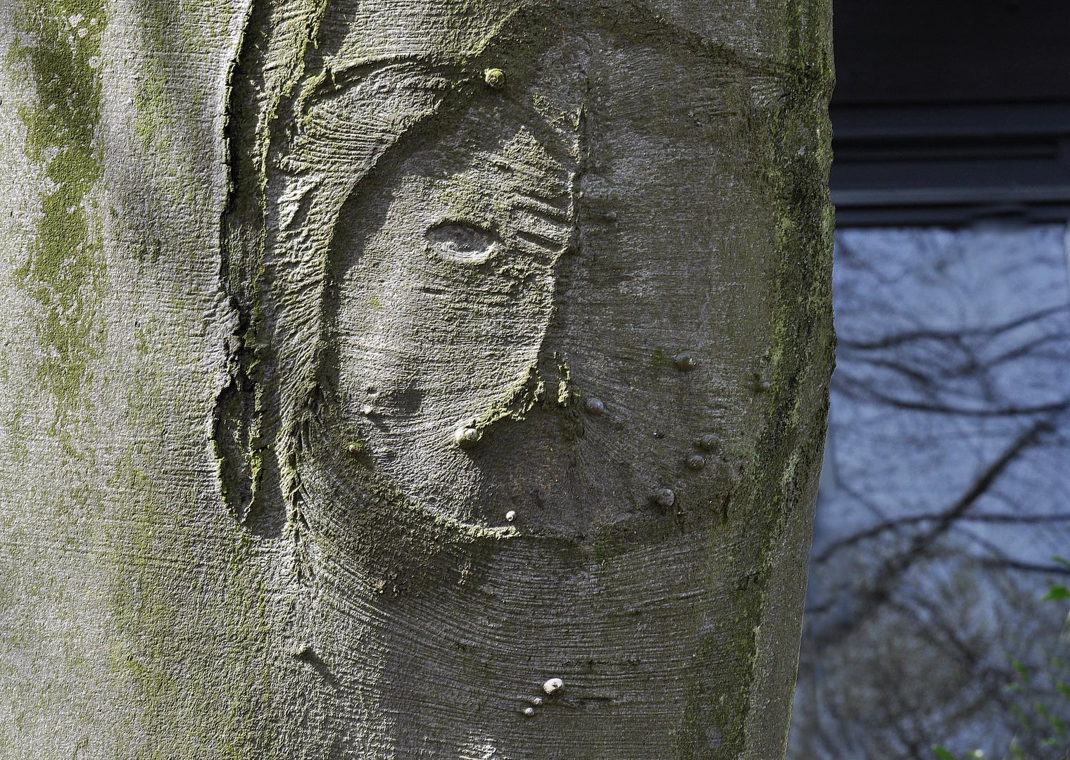 Kobold im Baum, zwinkert.......mit Piercing