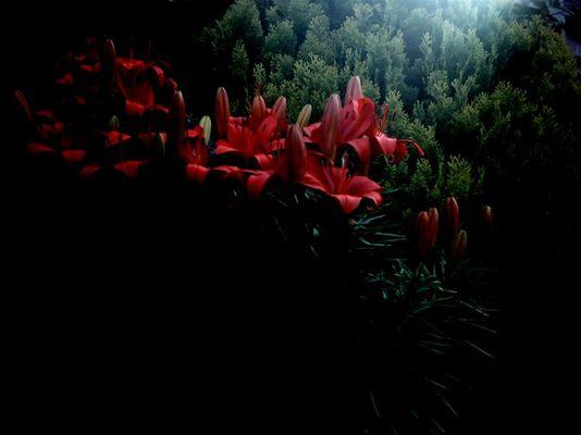 Koboldleiter... ...zum Träumen geht es über die Blätter...