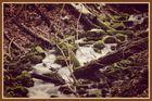 Kocherursprung Aalen - Unterkochen 6