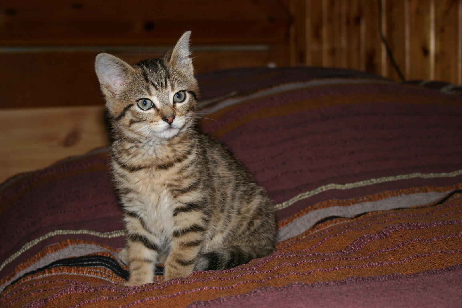 kochka quand elle était chaton