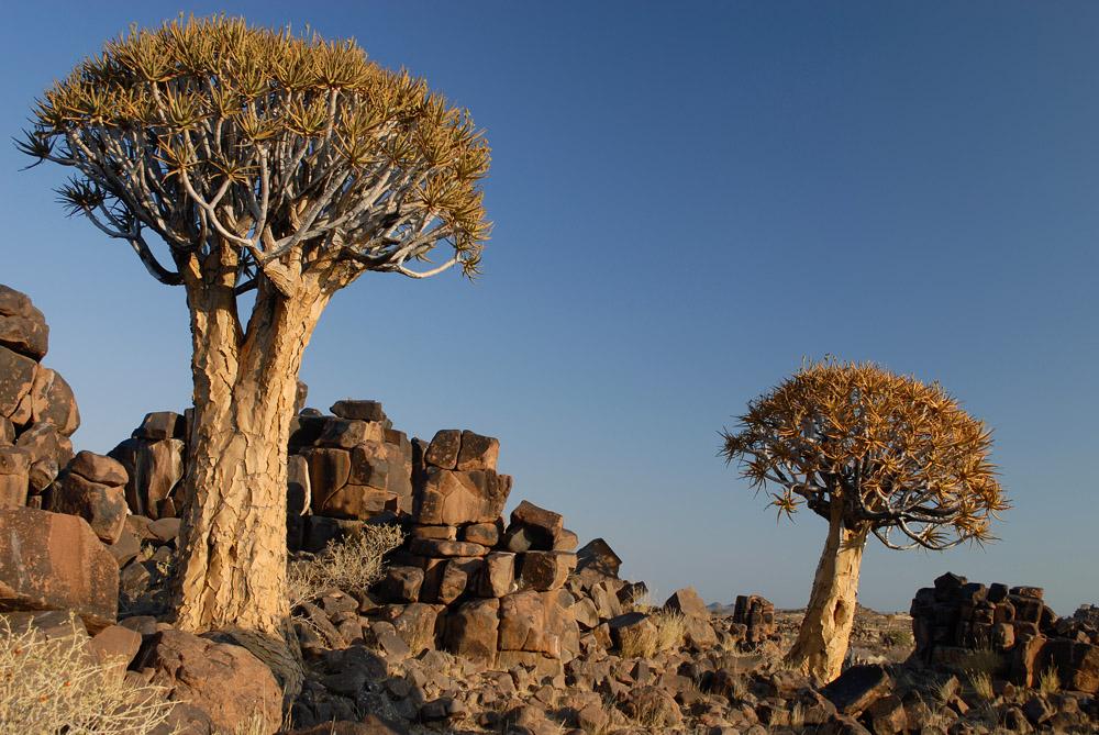 Köcherbäume, Mesosaurus Fossil Camp, Namibia