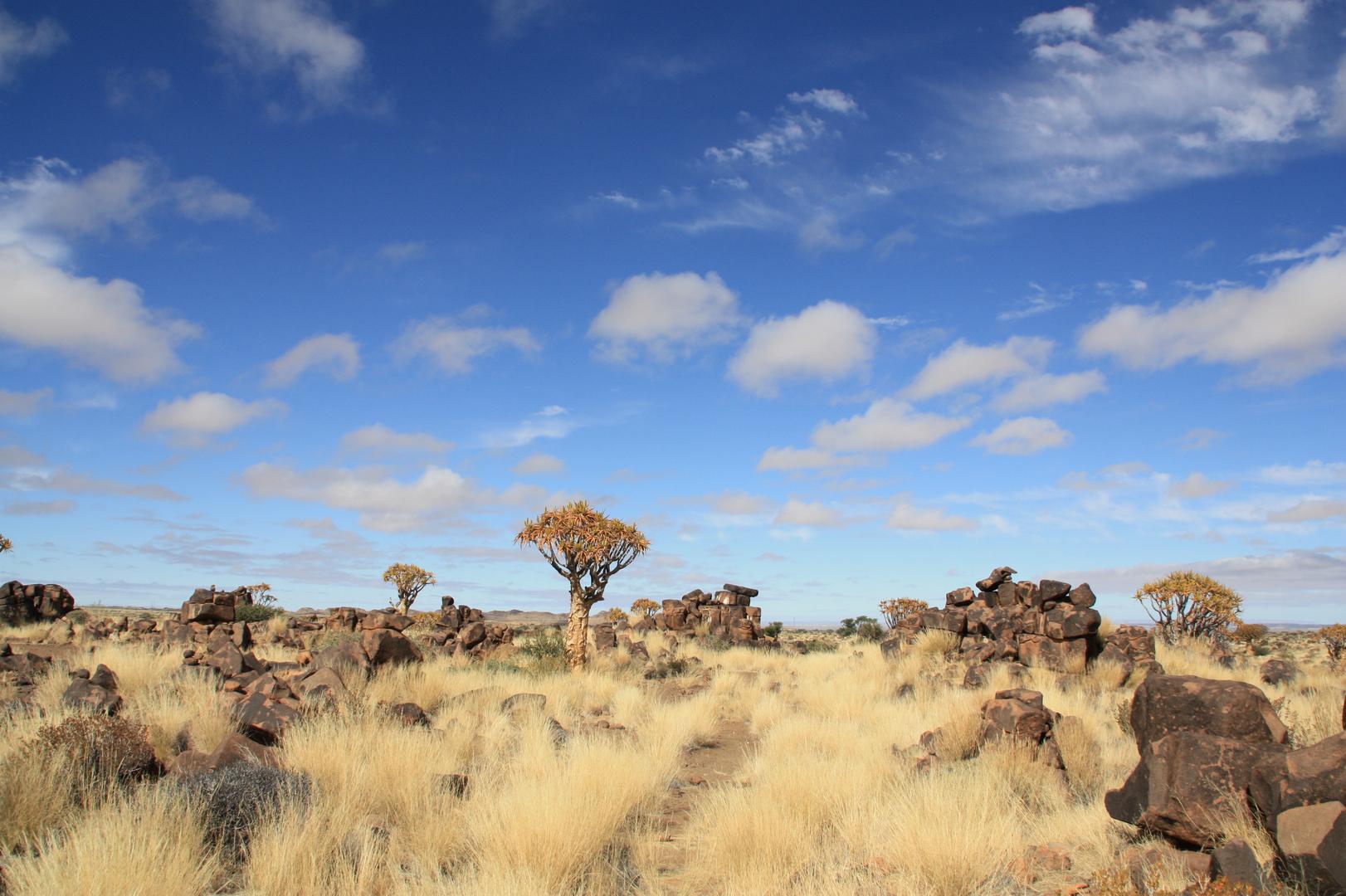 Köcherbaumwald - Namibia