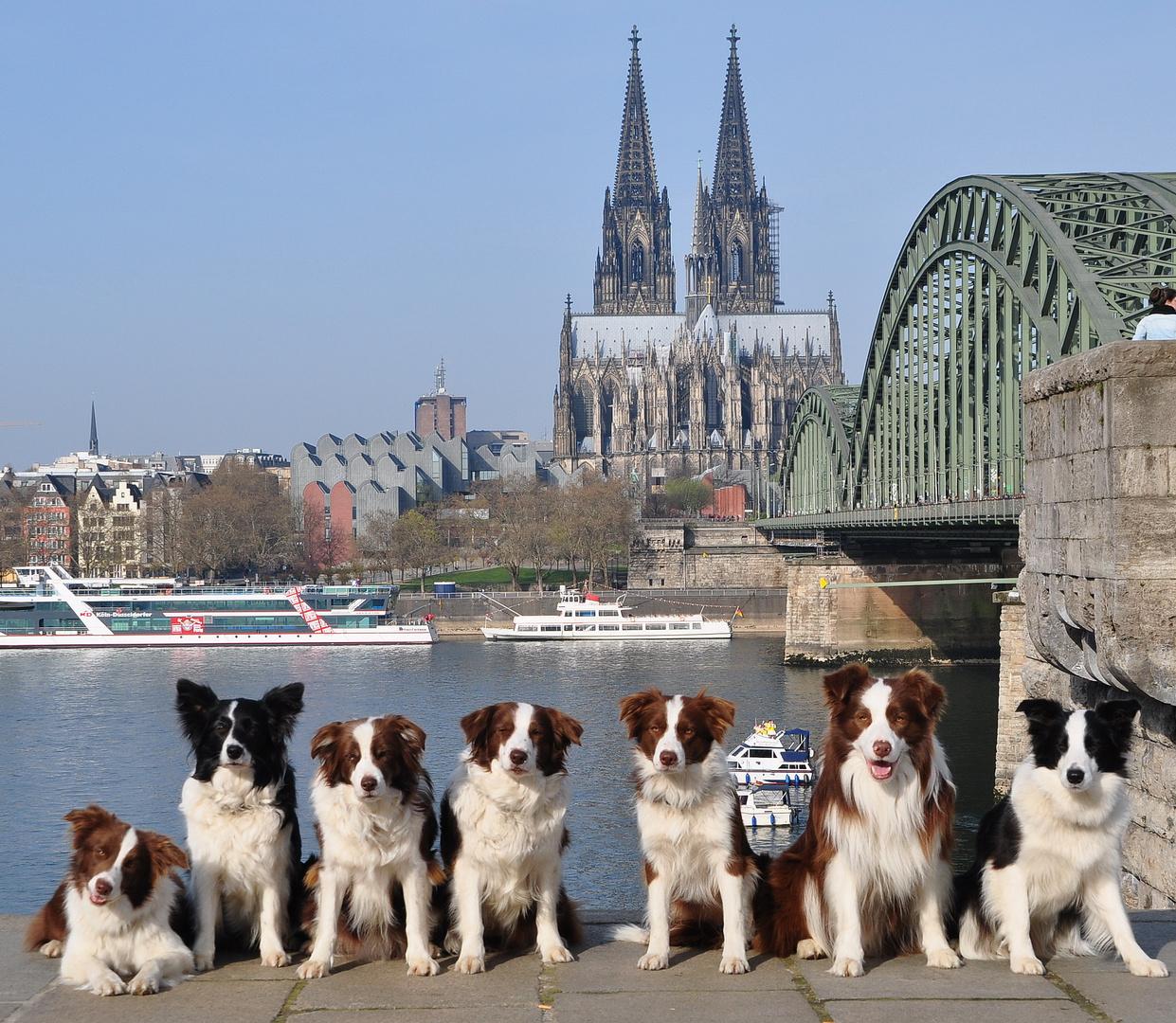 Kölner Hunde