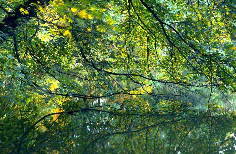 Kölner Stadtwald - Blätterreigen