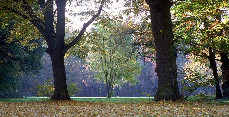 Kölner Stadtwald - Spätherbst