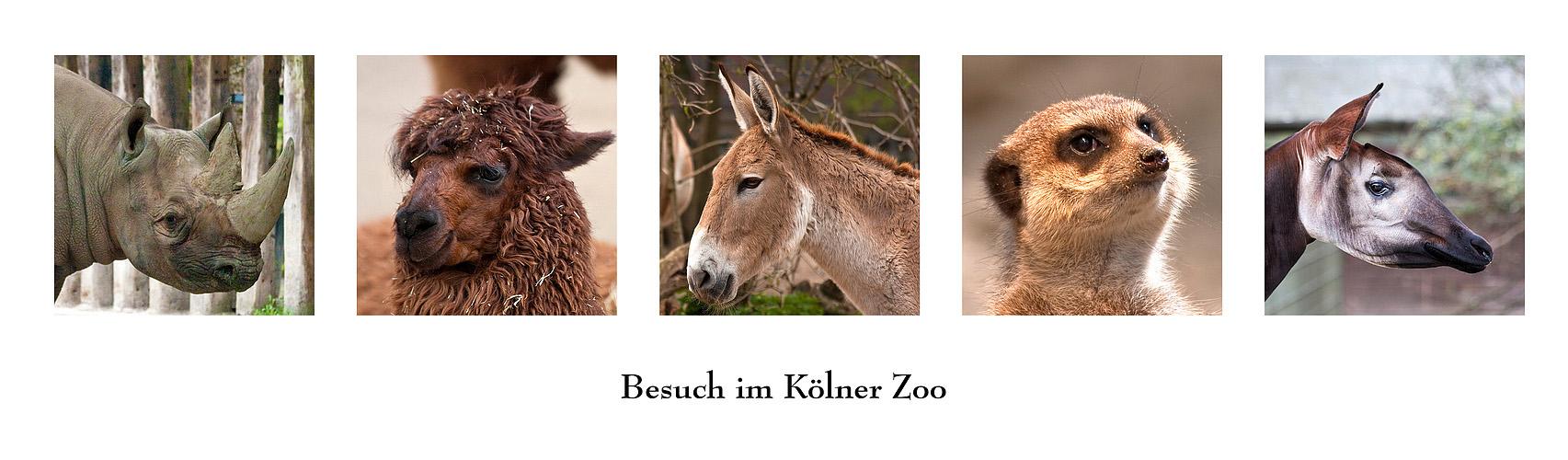 Kölner Zoo (1)