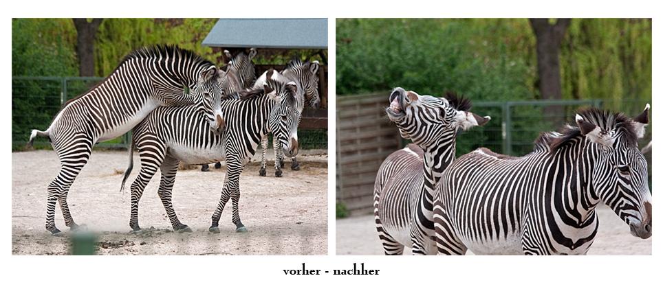 Kölner Zoo (2)