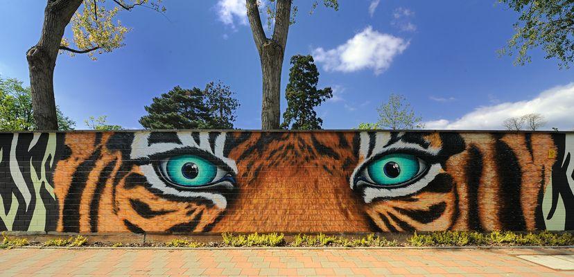 Kölner Zoo Graffitimauer