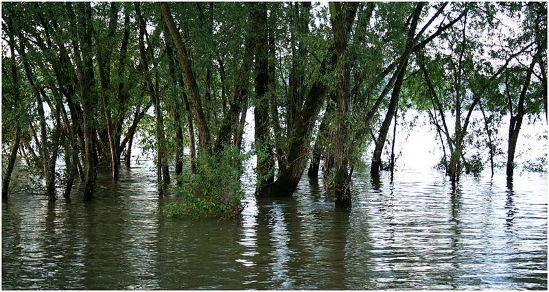 Kölscher Mangrovenwald