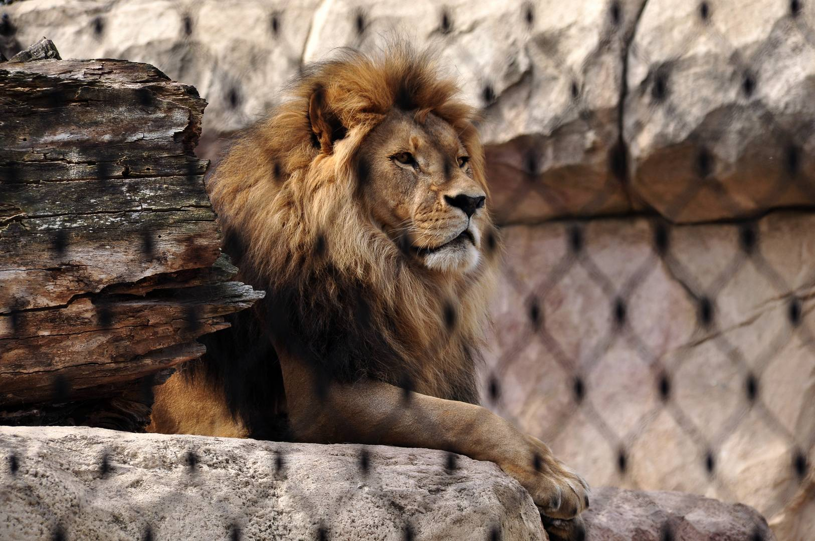 König hinter Gittern