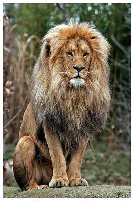 König Matadi