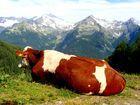 Königin der Alpen